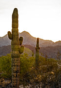 Sized Metal Prints - Sonoran Desert II Metal Print by Robert Bales