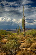 Southwest Landscape Metal Prints - Sonoran Desert Rains Metal Print by Saija  Lehtonen