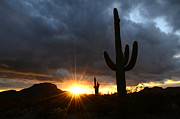 Desert Storm Prints - Sonoran Desert Rays Of Hope Print by Bob Christopher