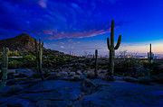 Scottsdale Photos - Sonoran Desert Saguaro Cactus by Scott McGuire