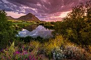 Arizona Sunset Photos - Sonoran Desert Spring Bloom Sunset  by Scott McGuire