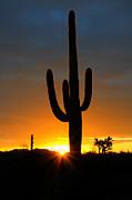 Sonoran Desert Sunrise 3 Print by Bob Christopher