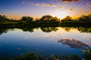 Arizona Prints - Sonoran Desert Sunset Reflection Print by Scott McGuire