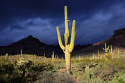 Stormy Weather Posters - Sonoran Desert Symphony Of Light 2 Poster by Bob Christopher