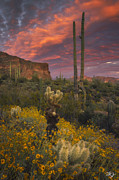 Superstition Prints - Sonoran Romance Print by Peter Coskun