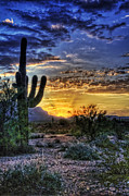 Sun Rays Photo Prints - Sonoran Sunrise  Print by Saija  Lehtonen
