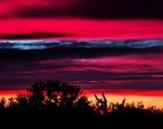 Sonoran Sunset Tucson Desert Print by Jon Van Gilder