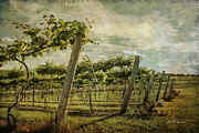 Silver Hills Winery Prints - Soon There Will Be Wine Print by Jeff Swanson