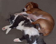 Fuzzy Digital Art - Sophie and Oliver Spooning by Maureen Tillman