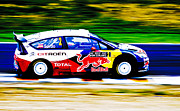 Hampton Downs Framed Prints - Sordo WRC Citroen Framed Print by motography aka Phil Clark