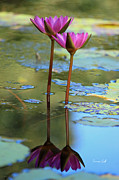 Lotus Blossoms Photos - Soul Mates by Suzanne Gaff