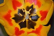 Soul Of A Tulip Print by Sonali Gangane