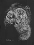 Chimpanzee Drawings Posters - Soulful Poster by Lawrence Tripoli