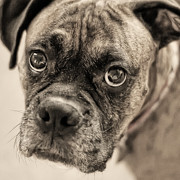 Abandoned Pets Posters - Soulful Look Poster by Jak of Arts Photography