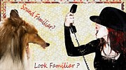 Collie Digital Art Posters - Sound Familiar Look Familiar Poster by Liane Wright