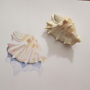 Seashell Drawings Metal Prints - Sound Of Sea Metal Print by Yuko Ikeda