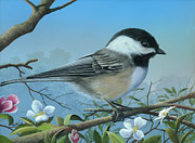 Black-capped Chickadee Greeting Cards Prints - Sounds of Spring Print by Mike Brown
