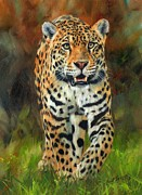 Oil Cat Paintings - South American Jaguar by David Stribbling