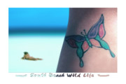 Butterfly Digital Art Posters - South Beach Wild Life Poster by Mike McGlothlen
