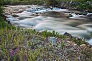James BO  Insogna - South Boulder Creek Summer View