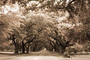 Fantasy Dreamy Oak Trees Posters - South Carolina Sepia Oak Trees Nature Landscape Poster by Kathy Fornal