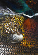 Pheasant Originals - South Dakota Plumes by Lynette Yencho