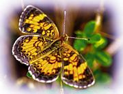 Barry Jones - Southern Butterfly