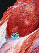 Comfort Paintings - Southern Comfort Flamingo by Donna Proctor