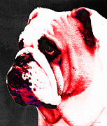 Georgia Bulldog Prints - Southern Dawg By Sharon Cummings Print by Sharon Cummings
