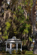 Oak Trees Prints - Southern Gothic in Mount Dora Florida Print by Christine Till