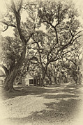 Evergreen Plantation Prints - Southern Lane sepia Print by Steve Harrington