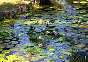 Lily Pond Framed Prints - Southern Lily Pond Framed Print by Carol Groenen
