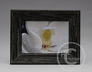 Stamen Mixed Media Originals - Southern Magnolia Blossom by Gail Fischer