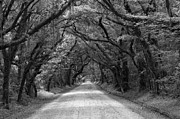 Adam Jewell - Southern Oak Avenue In Black And White