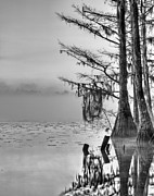 Cypress Swamps Framed Prints - Southern Roots Framed Print by JC Findley