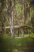Dunnellon Photos - Southern Shade by Judy Hall-Folde