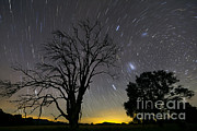 Bare Trees Posters - Southern Skies Star Trails, Mudgee, New Poster by Philip Hart