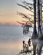 Swamps Prints - Southern Sunrise  Print by JC Findley