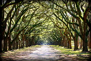 Country Lanes Metal Prints - Southern Way Metal Print by Carol Groenen