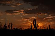 Tam Ryan - Southwest Desert Sunset