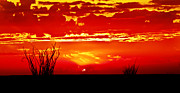 Desert Photography Posters - Southwest Sunset Poster by Robert Bales