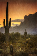 The Supes Photos - Southwestern Style  by Saija  Lehtonen