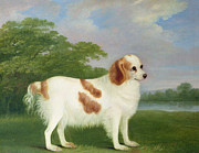 Primitive Metal Prints - Spaniel in a Landscape Metal Print by John Nott Sartorius