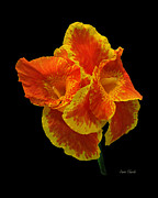 Spanish Dancer Photos - Spanish Dancer by Pam Clark