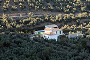 Olives Photo Posters - Spanish Home Amid Olive Groves Poster by Joe Fantauzzi