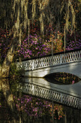 Reflections In River Prints - Spanish moss frames the white bridge reflections Print by Mark Serfass