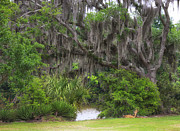 Avery Photos - Spanish Moss II by Chuck Kuhn