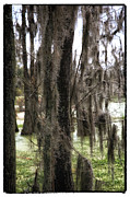 The Swamp Prints - Spanish Moss in the Swamp Print by John Rizzuto