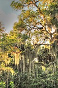 Vanessa Parent - Spanish Moss