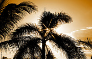 Tropical Sunset Metal Prints - Sparkle through the Palms Metal Print by Cheryl Young